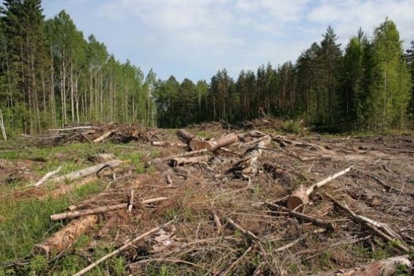 За минулий рік правоохоронні органи Рівненщини скерували до суду 17 кримінальних проваджень за фактами незаконних операцій з лісодеревиною