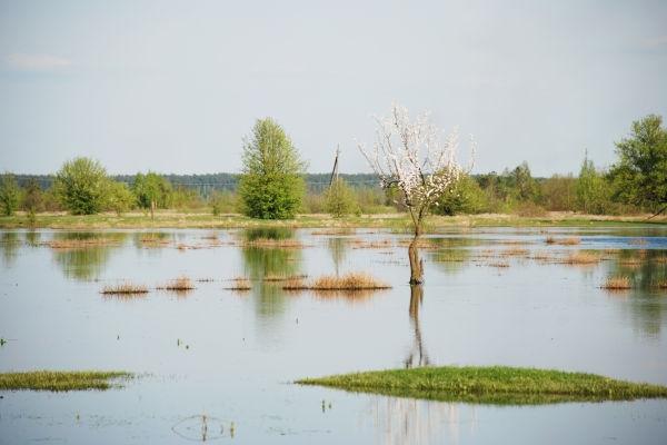 Рівненщина: річка Стир вийшла з берегів