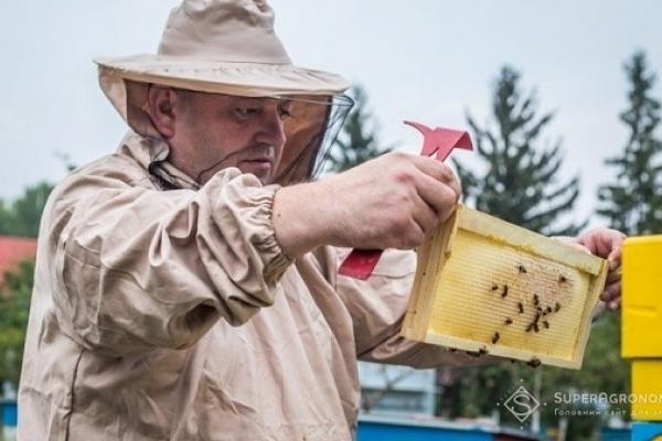 Пасічники Рівненщини б'ють на сполох: пестициди повільно нас вбивають (Відео)