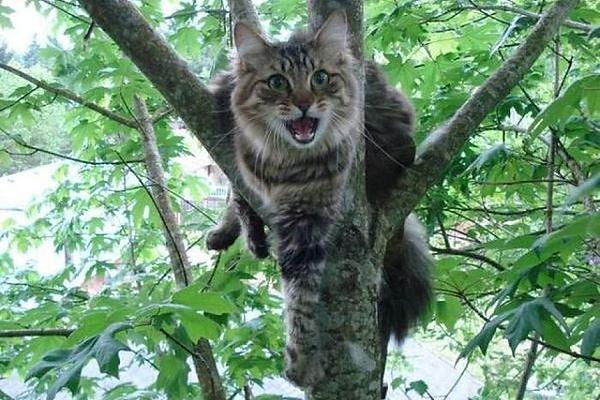 В Острозі пожежники знімали з дерева кота