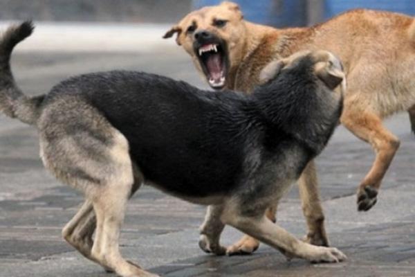 У Сарнах собаки покусали дітей – з весняною агресією бродячих псів треба щось робити