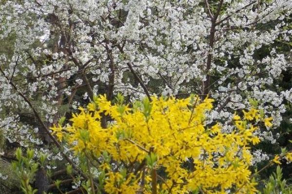 Sinoptik: Погода в Рівному та Рівненській області на середу, 25 квітня
