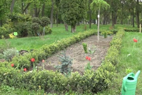 У Рівненському центральному парку культури ім. Т. Шевченка ландшафтні дизайнери наводять лад (Відео)