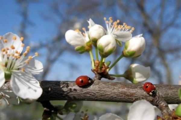 Sinoptik:  1 травня на Рівненщині cпекотно, але можлива гроза