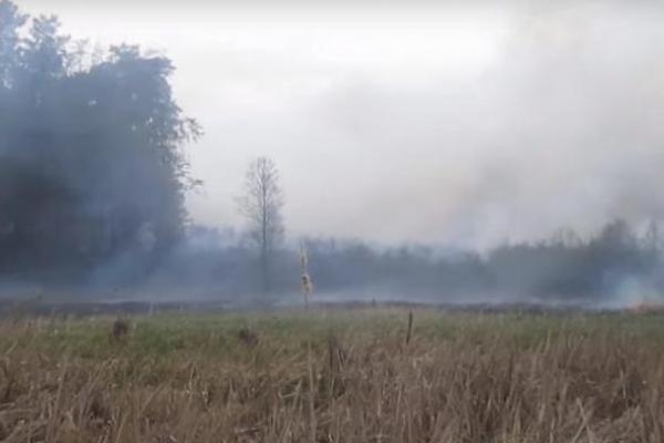 На Рівненщині рятували ліс від пожежі