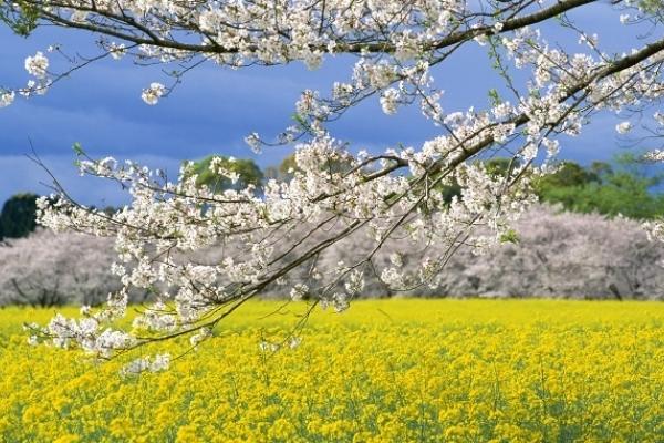 Sinoptik: Погода в Рівному та Рівненській області на вихідні, 5 і 6 травня