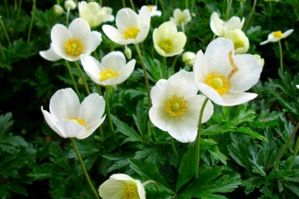 На ринках у Рівному продовжують продавати рідкісні квіти (Відео)