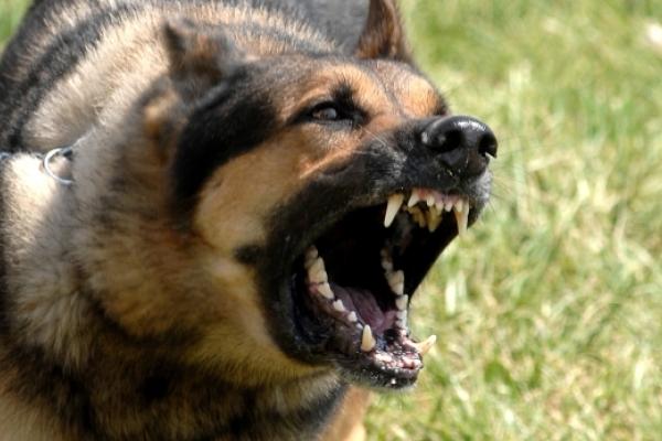 На Рівненщині зафіксували сім випадків сказу у собак та чотири – у лисиць