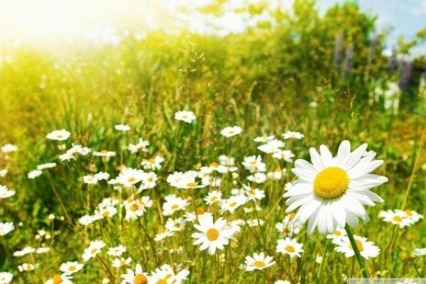 Sinoptik: Погода в Рівному та Рівненській області на п'ятницю, 11 травня