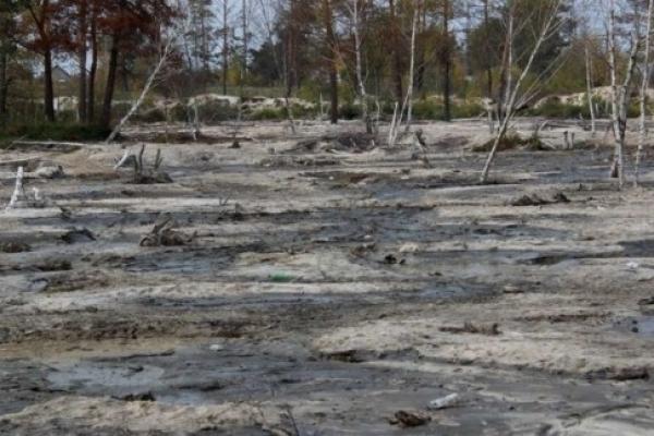 Землю, постраждалу від видобутку бурштину на Рівненщині, рекультивують