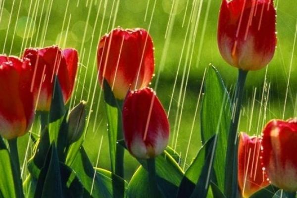 Sinoptik: Погода в Рівному та Рівненській області на середу, 16 травня
