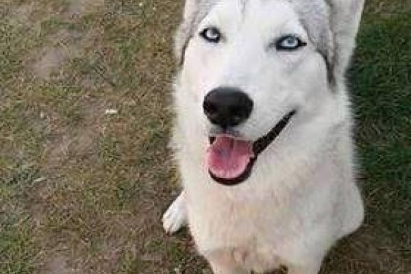 Рівняни просять допомогти розшукати зниклу собаку (Фото)