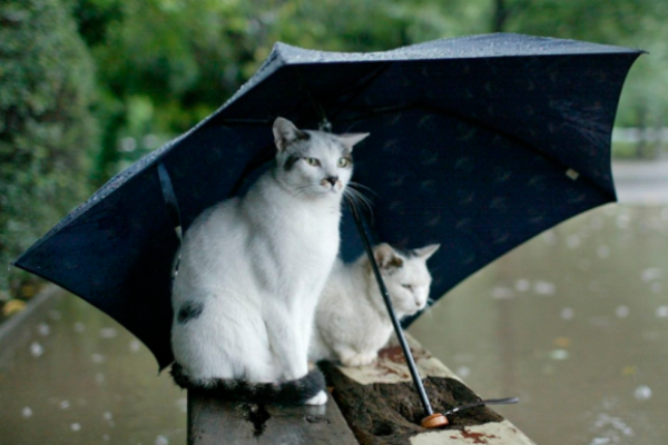Sinoptik: Погода в Рівному та Рівненській області на середу, 13 червня