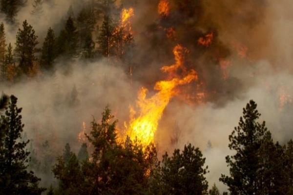 На Рівненщині рятувальники проводять роз'яснювальну роботу щодо пожежної безпеки на відкритих територіях