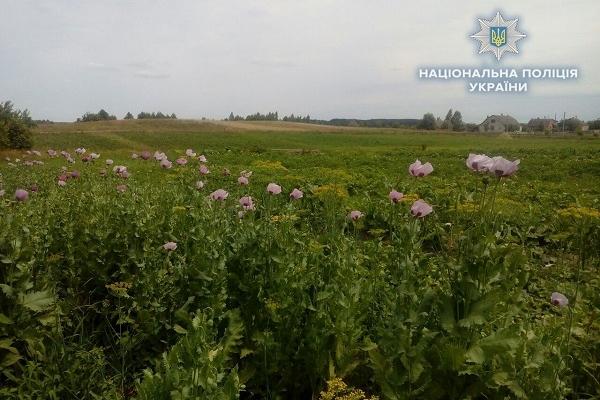 На Рівненщині виявили плантацію снодійного маку (Фото)