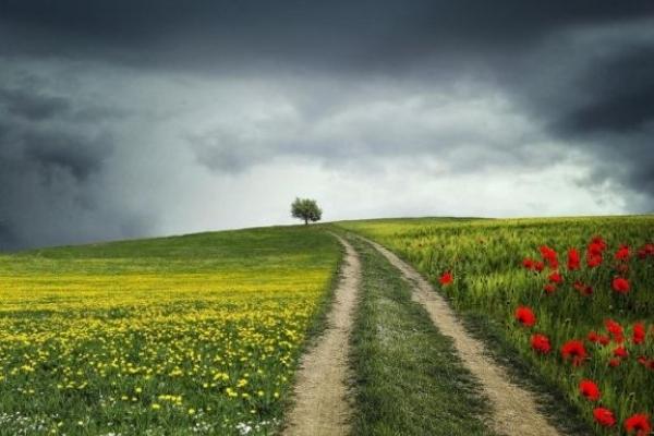 Sinoptik: Погода в Рівному та Рівненській області на середу, 20 червня