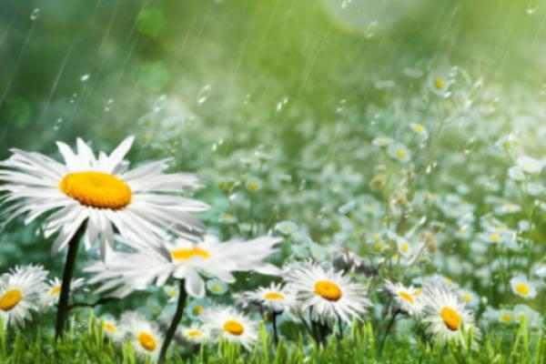 Sinoptik: Погода в Рівному та на Рівненщині на понеділок, 25 червня