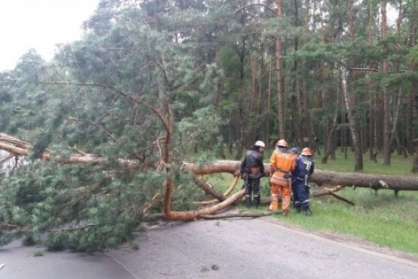 На Поліссі від сильного вітру впала на дорогу сосна