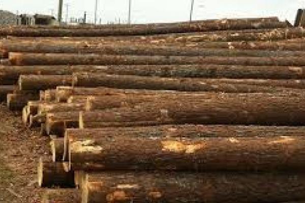 Рівненський ліс припав до смаку посадовцям