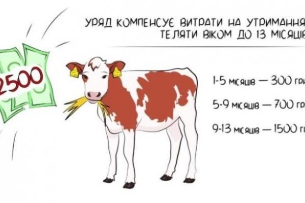 Гроші за вирощування телят отримав 221 селянин Рівненщини