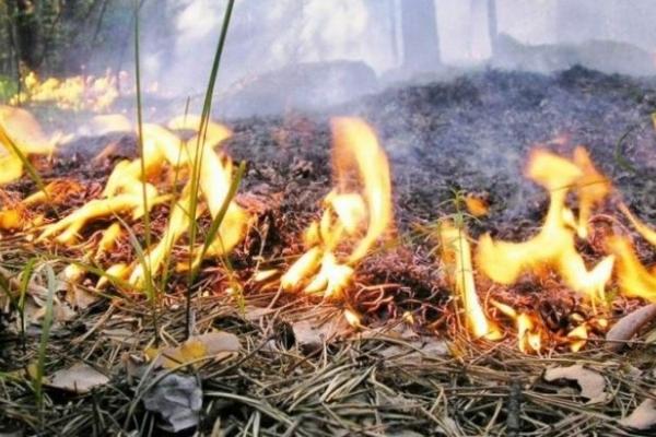 Рівненські рятувальники попереджають про надзвичайний рівень пожежної небезпеки