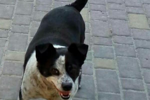 У Рівному пропала собака! (Фото)