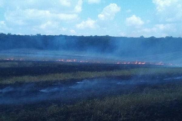 Загорілося поле на Млинівщині (Фото)