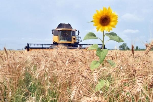 Рівненським аграріям: який в області фітосанітарний стан розвитку шкідників та хвороб сільськогосподарських культур?