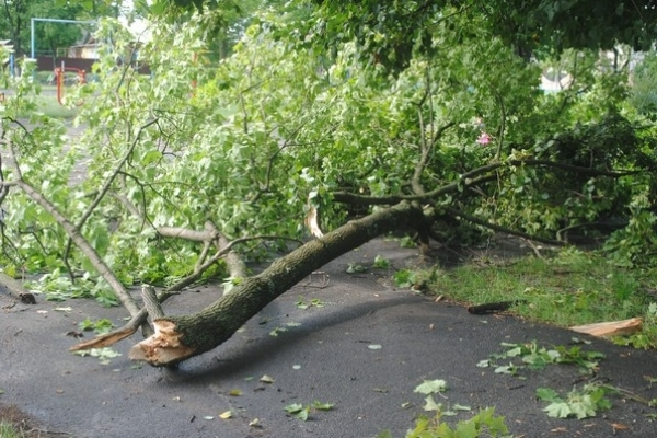 На Рівненщині попадали дерева (Фото)