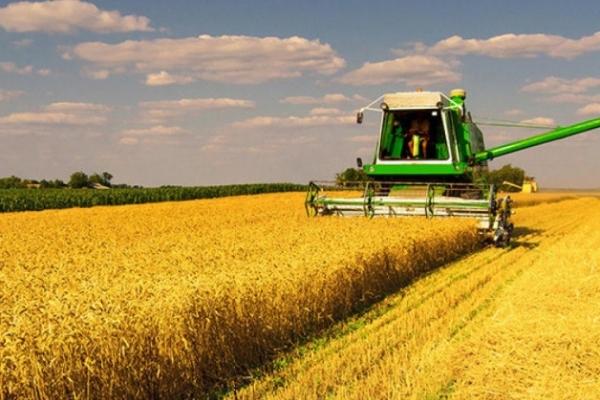 У п'яти районах Рівненщини - найвищий врожай зернових