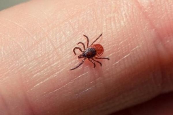 На Рівненщині зріс рівень захворюваності на хворобу Лайма