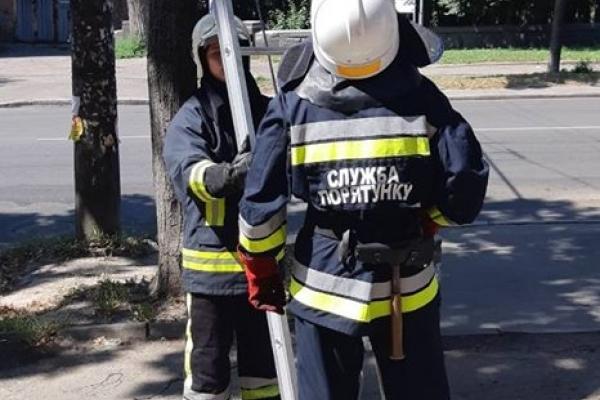 Рівненські вогнеборці допомогли зняти з дерева кошеня (Фото)
