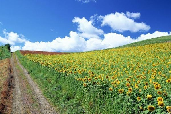 Sinoptik: Погода в Рівному та Рівненській області на четвер, 16 серпня