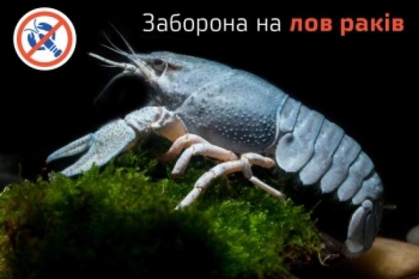 На Рівненщині діє тимчасова заборона вилову раків