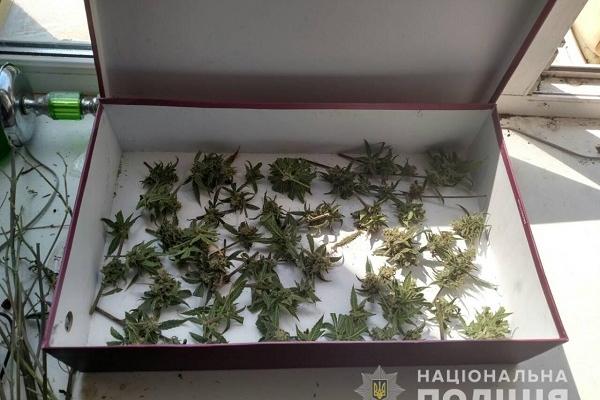 Житель Рівненщини вирощував марихуану вдома у спеціально обладнаній кімнаті (Фото)