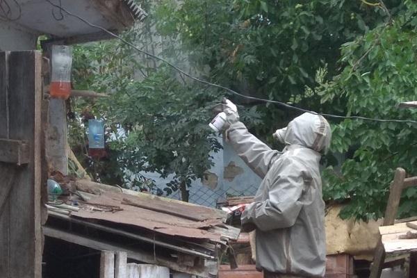 На Рівненщині продовжують виявляти та знешкоджувати кубла шершнів (Фото)