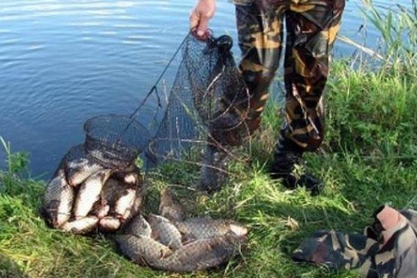 Рівненський рибоохоронний патруль у серпні викрив 39 порушень