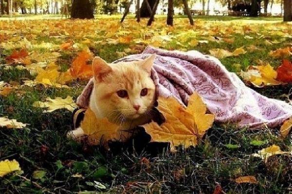 Sinoptik: Погода в Рівному та Рівненській області на вівторок, 11 вересня
