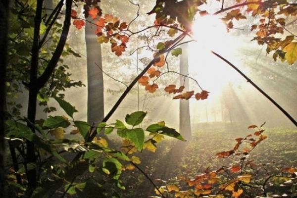 Sinoptik: Погода в Рівному та Рівненській області на четвер, 13 вересня