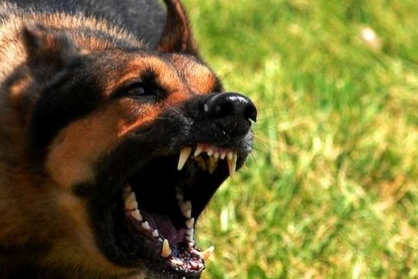 На Рівненщині на дитину напав скажений собака