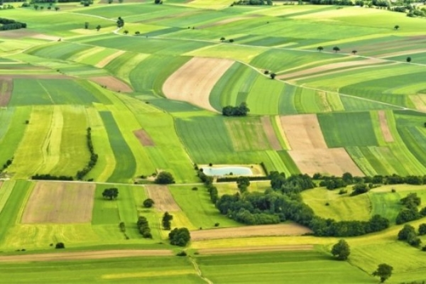 У Дубні здали в оренду чотири земельні ділянки