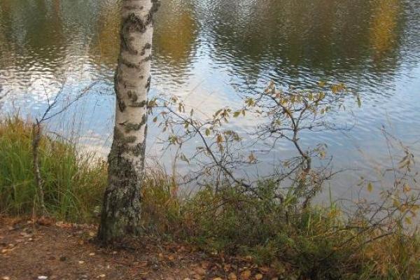 Sinoptik: Погода в Рівному та Рівненській області на середу, 19 вересня