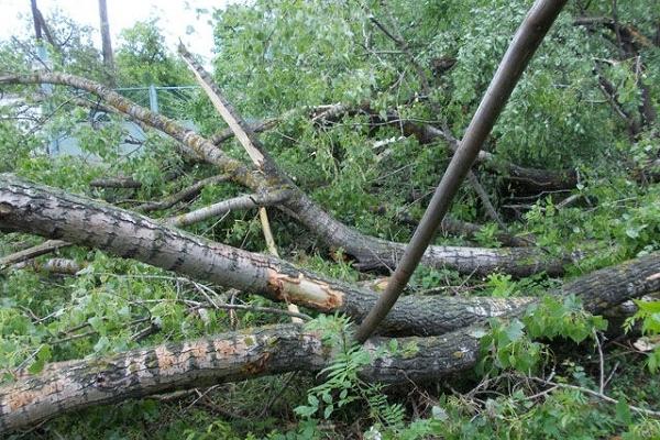 В смт. Млинів зрізали небезпечне дерево
