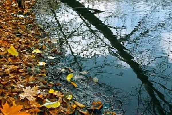 Sinoptik: Погода в Рівному та Рівненській області на вівторок, 2 жовтня
