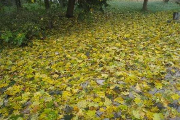 Погода в Рівному та Рівненській області на четвер, 4 жовтня