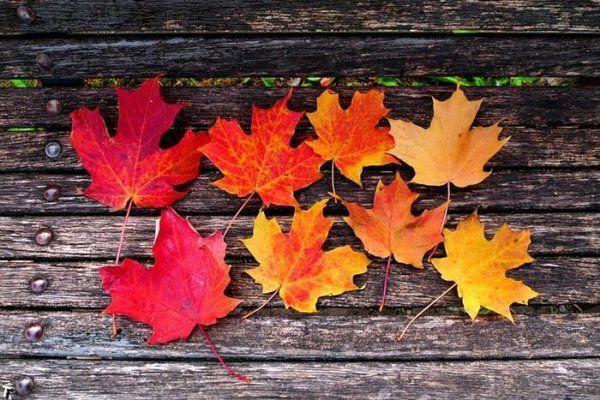 Погода на Рівненщині в суботу, 20 жовтня