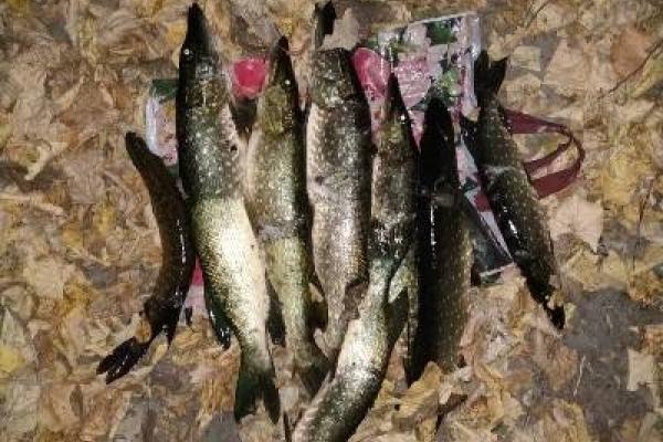 На Хрінницькому водосховищі впіймали нічних  любителів риболовлі