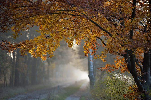 Погода на Рівненщині у понеділок, 22 жовтня