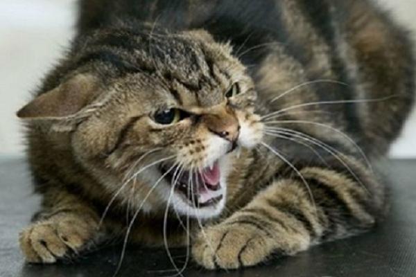 Скажений кіт напав на жінку прямо на подвір'ї її будинку