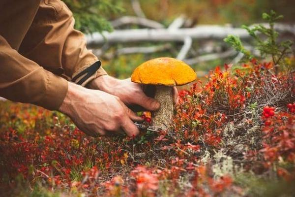 Житель Рівненщини отруївся грибами